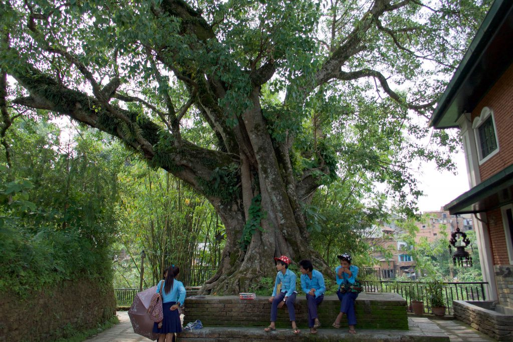 Chautara is a resting place under a tree in Nepal