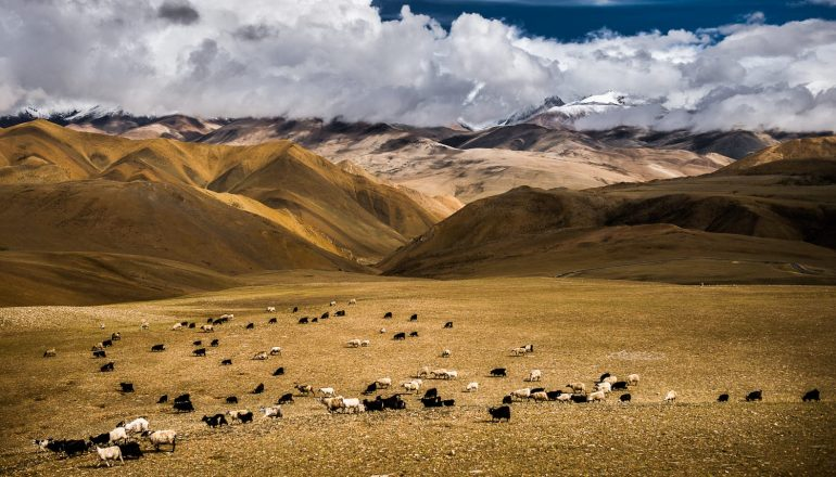Places to visit in Nepal   Mesmerising eyeshots of Hilly Pastures!